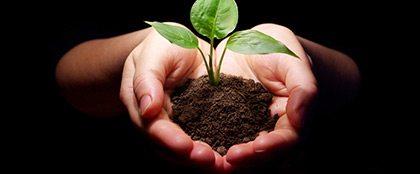 plantar e colher - Você Colhe O Que Planta